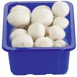 Champignons blancs ravier 500g