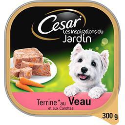Terrine au veau et aux carottes pour chiens
