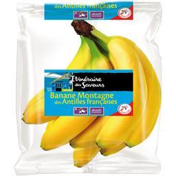 Banane Montagne des Antilles françaises