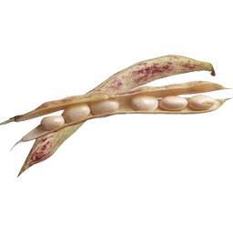 Haricot COCO PAMPOLAIS