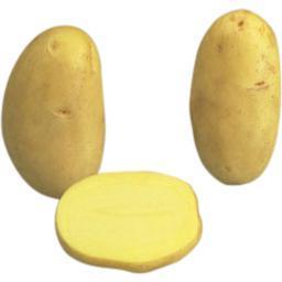 Pomme de terre de consommation CAESAR, à chair farineuse